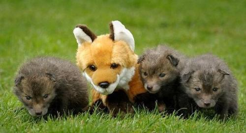lovely foxes - love exsites anywhere