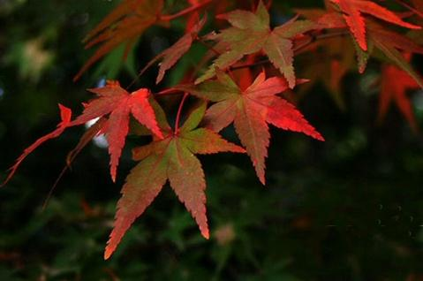 leaves - photo resolution:479*318