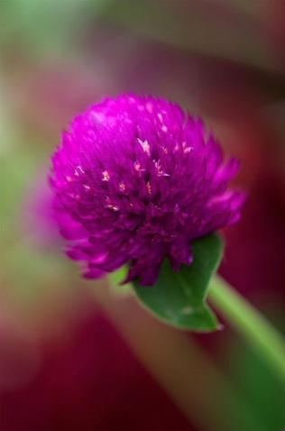 flower - photo resolution:316*478