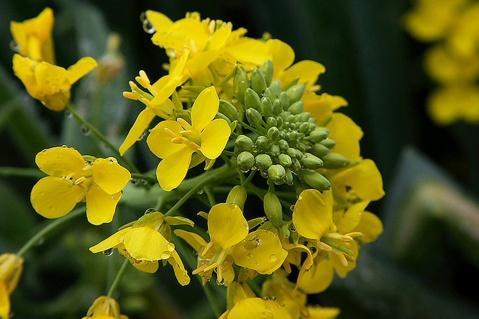 flower - photo resolution:479*319