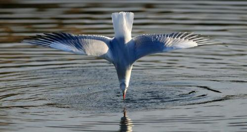 bird - bird drinking water