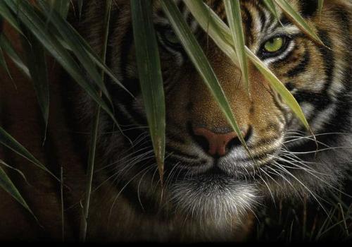 tiger - tiger art