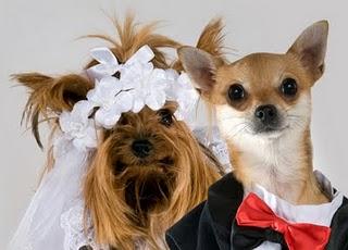 Cute Weddings - Weddings make couples cute!