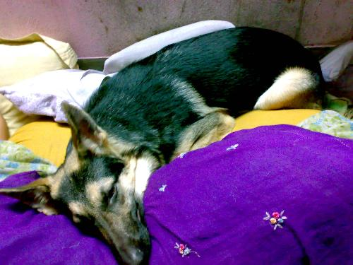 Winter Pleasure - My pet occupying my bed! where to sleep!!!!