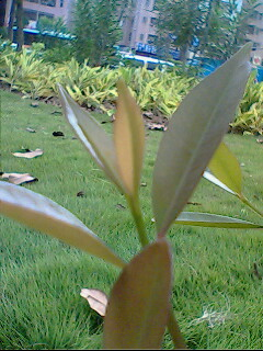 green leaves - photo resolution:240*320