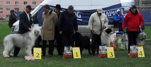 Romanian shepherds winners - Winners in the Best Romanian Shepherd contest at CAC Brasov 2011