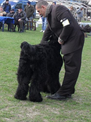 Reserve Best in show - Reserve Best in Show at CAC Brasov 2011