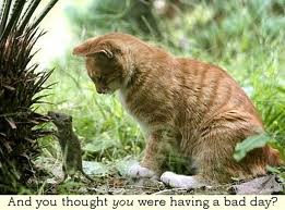 Bad day? - There is nothing a bad day! Its a good day ruined so badly by me!
