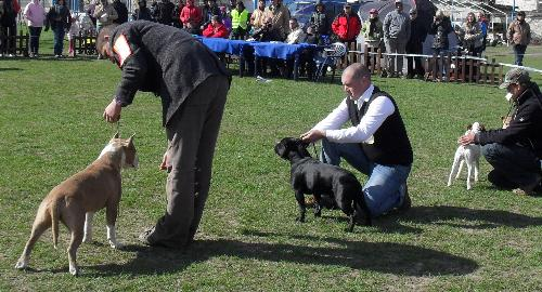 Third group judging - Dogs from the third group being judged in the show ring at CAC Brasov 2011