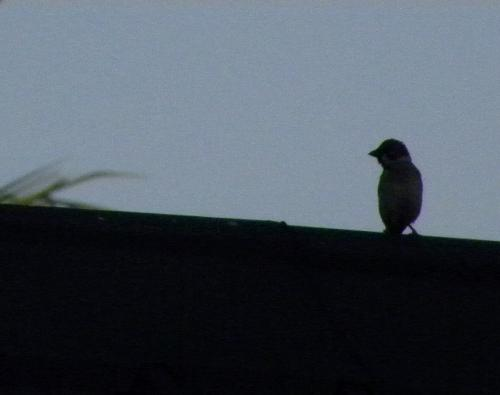 Bird - A lonely silhouette of a solitary bird.