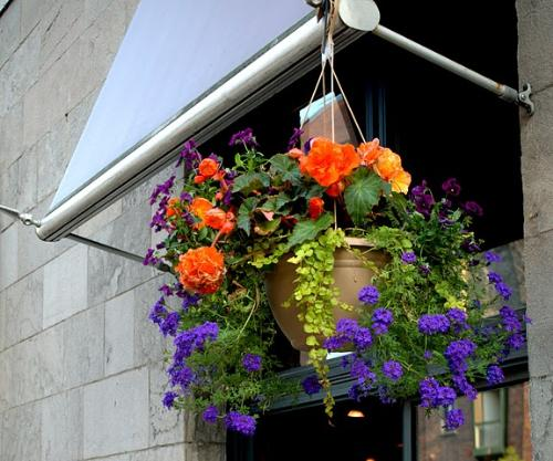 Flowers in the Pot - This is seen in one of the windows of a building in Montreal. The combination of colors of flowers in the pot is so beautiful!