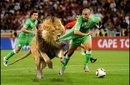 our moroccan team - the moroccan team(lions) vs the algerian team