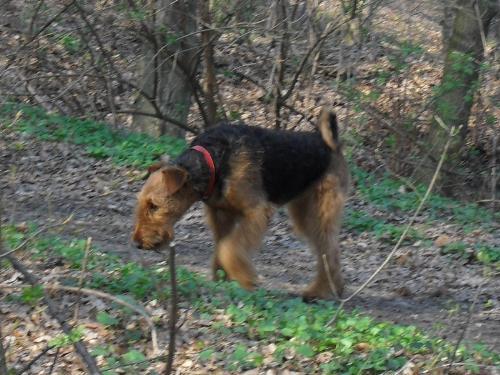 I'm going to get it! - Binne during a hike at Boul de Piatra