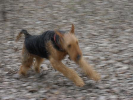 Don't stop me now! - Binne during a hike at Boul de Piatra