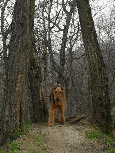I'm coming! - Binne during a hike at Boul de Piatra