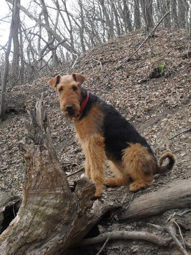 OK, I sat. Now what? - Binne during a hike at Boul de Piatra