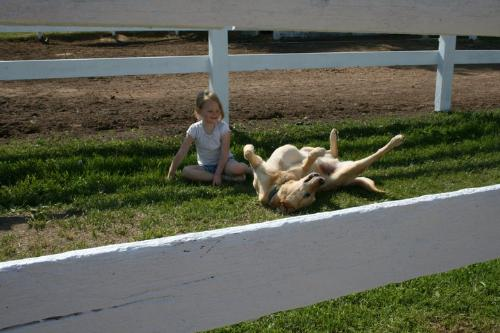 Baylee and Sunny - Baylee is watching Sunny roll in the grass!