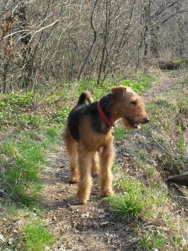 Shall we go? - Binne during a hike on Capela