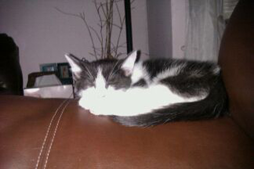 Kitty :) - My adorable baby.
