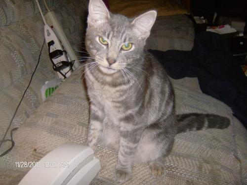 This is Jasper - My good kitty