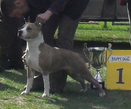 Best in show winner - at CAC Brasov 2011