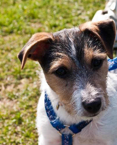 My dog, Lola - This my dog Lola