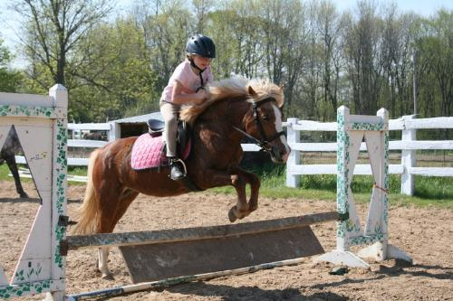 Candy and Emma - Candy is the pony. She is a 16 yr old Halflinger/Sheltand/Welsh mare. Emma is her owner and rider.