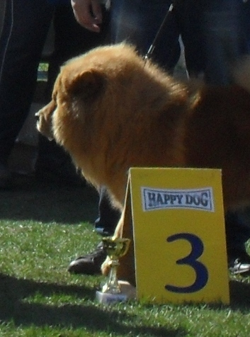 Chow Chow - at dog show CAC Brasov 2011