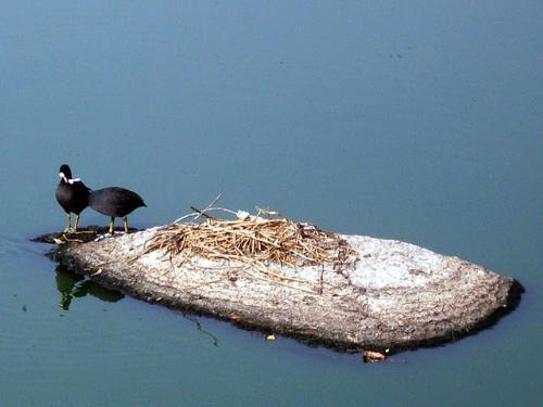 Birds - Birds enjoying kissing