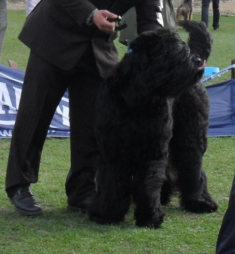 Tchorny Terrier - at dog show CAC Brasov 2011