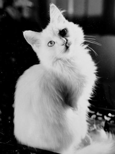 cat - Always loving cats.