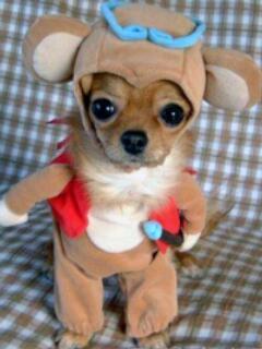 Dog - Small dog