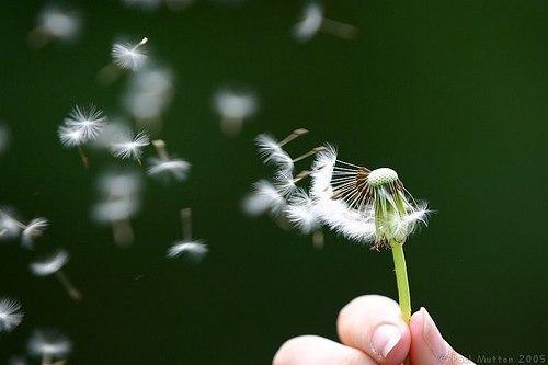 Flower - a beautiful flower