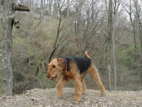 I'm coming... - Binne during a hike on Capela