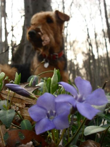 Mind your flowers and let me do my job, will you? - Binne during a hike on Capela