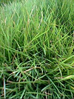 green leaf - photo resolution: 240*320