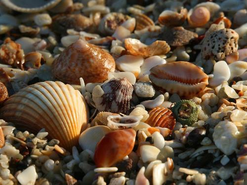 shells - beautiful shells