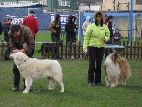 First group judging - at CAC Brasov 2011