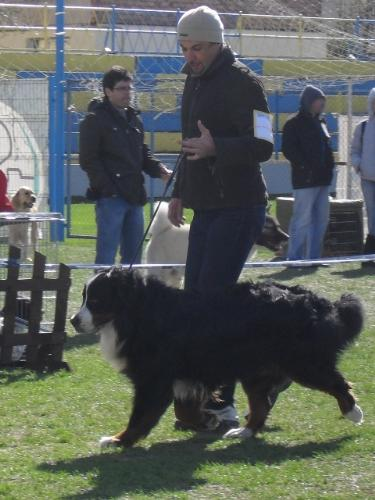 Bernen Shenenhund - at CAC Brasov 2011