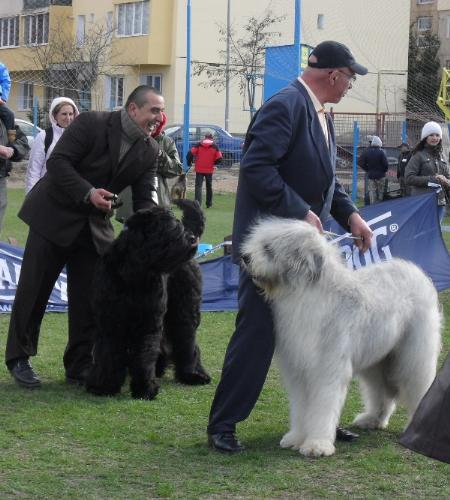 Best in show judging - at CAC Brasov 2011