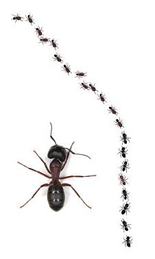 Ants - Ants is an insect that can be really annoying when they exist in your house compound. You will get attack without realizing it.