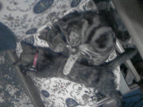 Cats sleeping - Cats sleeping on a chair.