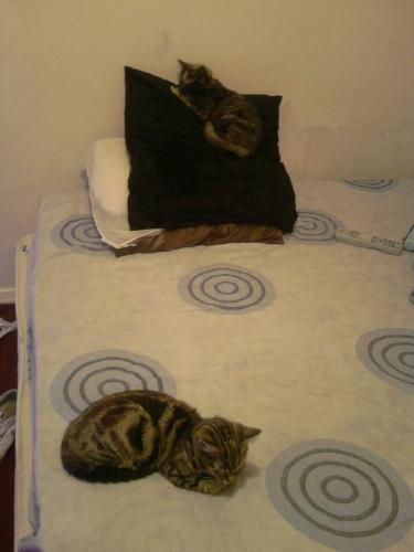 Cats on bed - Cats sleeping on bed.