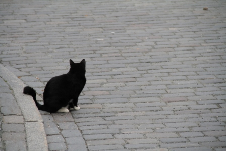 Cat in the street - Cat in the street, staring at a dog in distance