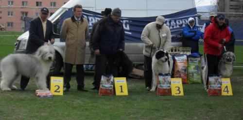 Romanian shepherds - at CAC Brasov 2011
