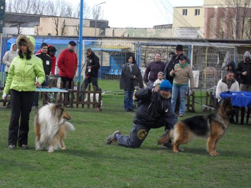 German Shepherd and Collie - at CAC Brasov 2011