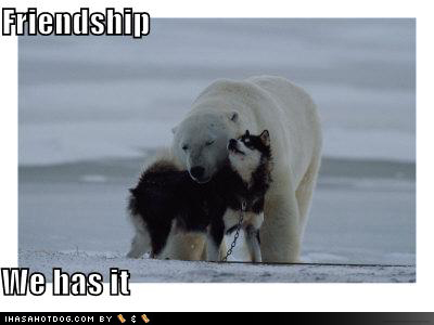 Friendship - A lolcatz style photo of a dog and a polar bear nuzzling each other in a sign of mutual friendship.