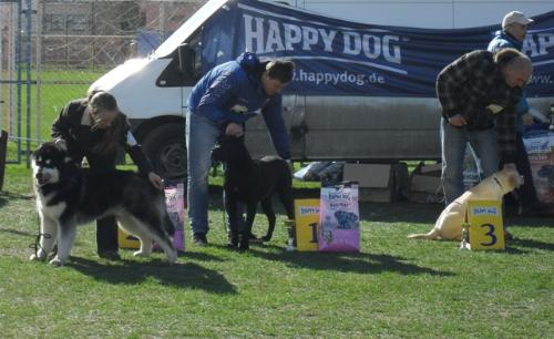 Best Puppy in show judging - at CAC Brasov 2011