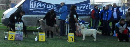 Best Junior in show winners - at CAC Brasov 2011
