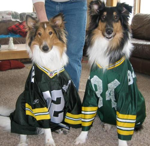Packer Fans - These collies are true Packer fans!